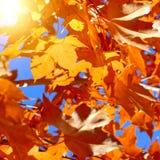 Färgrikt lämnar, trees, lawn, Etc Arkivbild