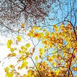 Färgrikt lämnar, trees, lawn, Etc Royaltyfri Fotografi