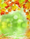 Färgrikt lämnar, trees, lawn, Etc Arkivfoto