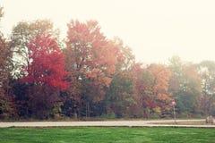 Färgrikt lämnar, trees, lawn, Etc Arkivfoton