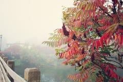 Färgrikt lämnar, trees, lawn, Etc Royaltyfria Bilder