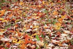 Färgrikt lämnar, trees, lawn, Etc Royaltyfri Bild