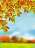 Färgrikt lämnar, trees, lawn, Etc höstguldleafs några trees Royaltyfri Bild