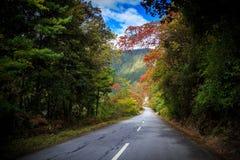 färgrikt långt Fotografering för Bildbyråer