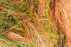 Färgrikt löst gräs i berget arkivfoto