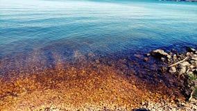 Färgrikt lakeshore i sommaren Royaltyfri Fotografi