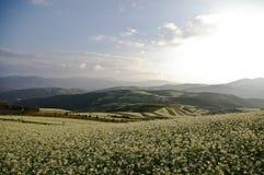 färgrikt land för cole Royaltyfri Fotografi