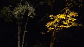 Färgrikt ljus på höstträdfilialer parkerar in belysningfestival på natten 4K lager videofilmer