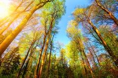 Färgrikt och soligt skoglandskap arkivfoton