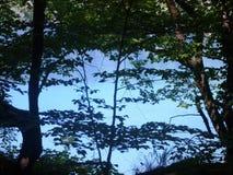 Färgrikt och vibrerande landskap av sjökusten Stillsamt landskap som är användbart som bakgrund Fäll ned sjökanjonen Plitvice sjö Arkivfoto