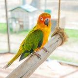 Färgrikt papegojafågelsammanträde på sittpinnen Royaltyfri Fotografi