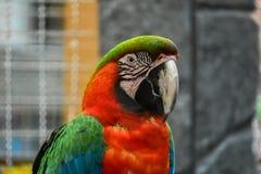 Färgrikt papegojahuvud Royaltyfri Fotografi