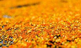 Färgrikt pollen royaltyfri foto