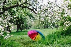 Färgrikt regnbåge-paraply i den blommande trädgården Vår utomhus Royaltyfri Fotografi
