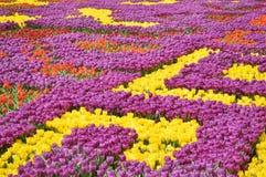 färgrikt snör åt Royaltyfri Bild