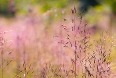 Färgrikt sommargräs fotografering för bildbyråer