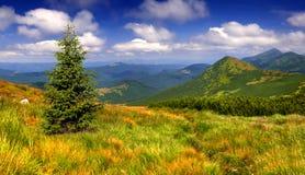 Färgrikt sommarlandskap i berg Arkivfoto