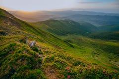 Färgrikt sommarlandskap i de Carpathian bergen Royaltyfri Foto