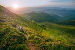 Färgrikt sommarlandskap i de Carpathian bergen Arkivbild
