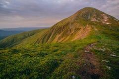 Färgrikt sommarlandskap i de Carpathian bergen Royaltyfria Foton