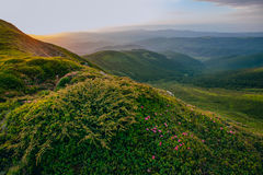 Färgrikt sommarlandskap i de Carpathian bergen marmor polerad stenyttersidatextur Arkivfoton