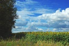 Färgrikt sommarlandskap med att blomma solrosor royaltyfri foto