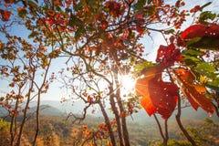 Färgrikt sommarlandskap med solen som skiner till och med härliga sidor av lösa träd Skog- och bergbakgrunder brigham royaltyfria bilder