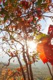 Färgrikt sommarlandskap med solen som skiner till och med härliga sidor av lösa träd Skog- och bergbakgrunder brigham royaltyfri foto