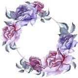 färgrikt steg Blom- botanisk blomma Fyrkant för ramgränsprydnad Fotografering för Bildbyråer