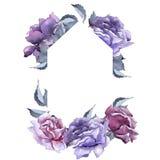 färgrikt steg Blom- botanisk blomma Fyrkant för ramgränsprydnad Arkivbild