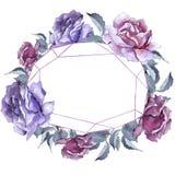 färgrikt steg Blom- botanisk blomma Fyrkant för ramgränsprydnad Arkivfoton