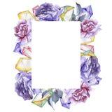 färgrikt steg Blom- botanisk blomma Fyrkant för ramgränsprydnad Royaltyfria Foton