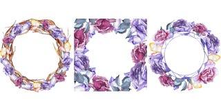 färgrikt steg Blom- botanisk blomma Fyrkant för ramgränsprydnad Arkivbilder