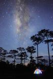 Färgrikt tält i skog med den mjölkaktiga vägen i mörk himmel royaltyfria bilder