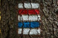 Färgrikt tecken för att fotvandra på skället av ett träd Arkivbild