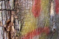 färgrikt texturträ Arkivbild