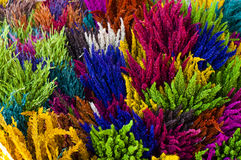 färgrikt torka blomman Royaltyfri Bild