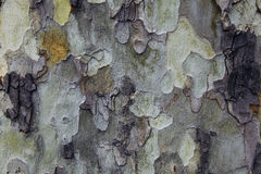 färgrikt trä Arkivbild