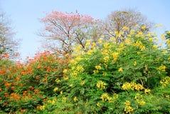 Färgrikt träd arkivfoto