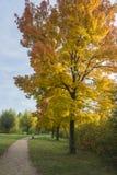 Färgrikt träd i en parkera Royaltyfri Fotografi