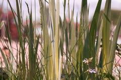 Färgrikt trädgårds- gräs Royaltyfri Bild