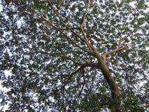 färgrikt treeparaply för begrepp 3d Royaltyfri Foto