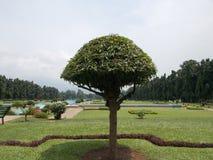 färgrikt treeparaply för begrepp 3d Arkivbild