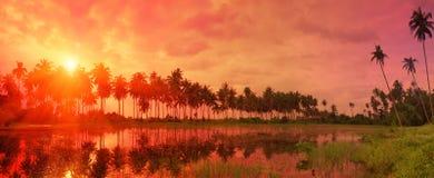 Färgrikt tropiskt landskap med skymninghimmel- och palmträdreferens fotografering för bildbyråer