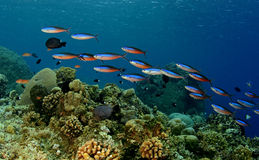 färgrikt undersea Fotografering för Bildbyråer
