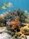 Färgrikt undervattens- landskap i det karibiska havet Arkivbild