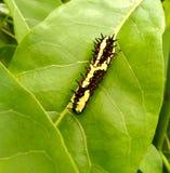 Färgrikt värme i grönt blad Arkivfoton