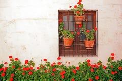 färgrikt växtfönster royaltyfria bilder