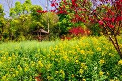 Färgrikt våldta blommafältet arkivfoto