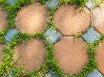 Färgrikt vagga tegelplattan med gräs i trädgården Royaltyfria Bilder